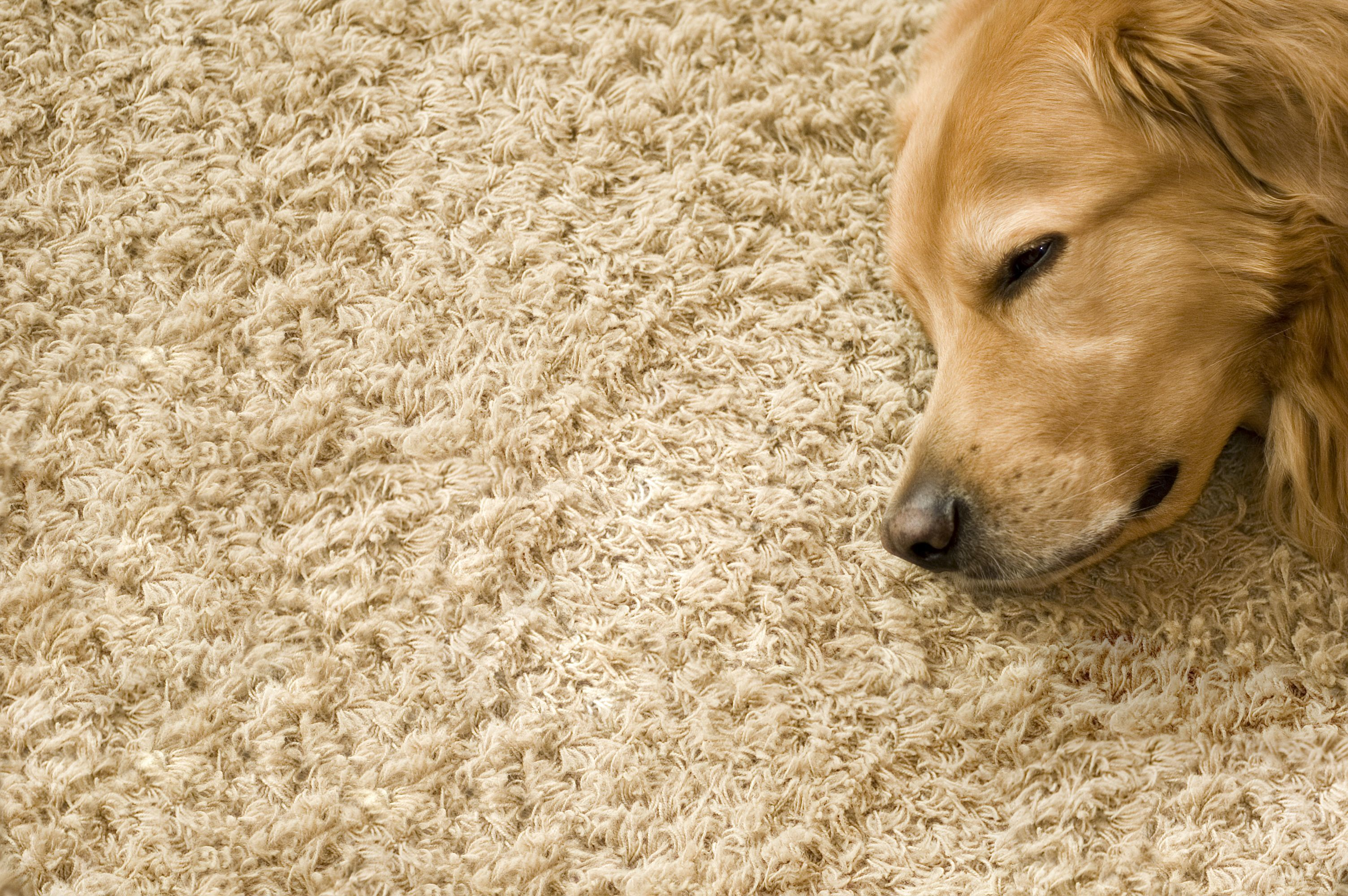 CARPET CLEANING | STEAM GREEN CARPET CLEANING