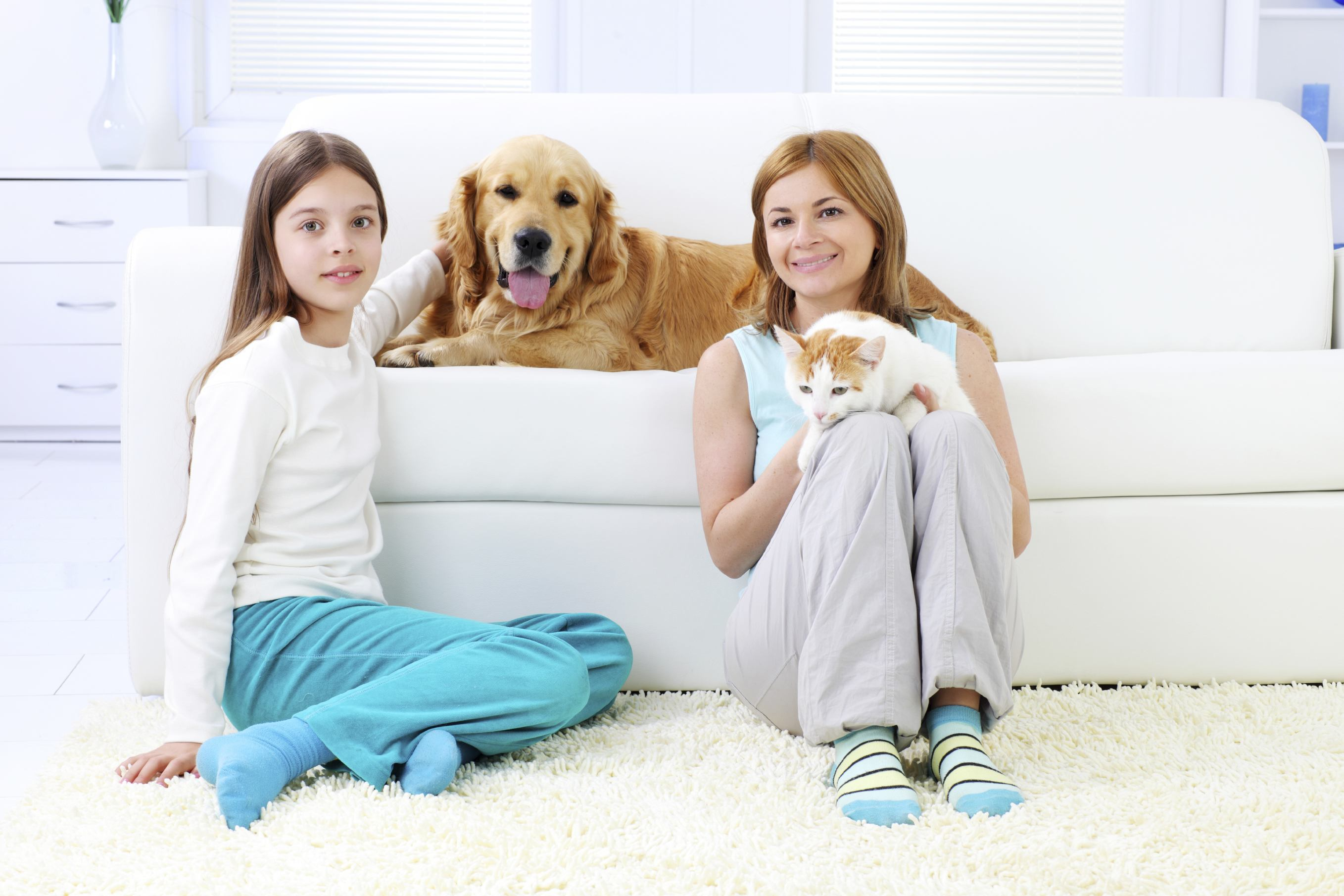 Pet Urine Amp Odor Removal My Steam Green Carpet Cleaning