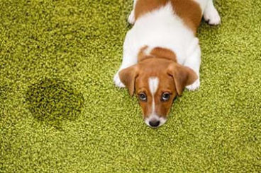 Pet Urine & Odor Removal